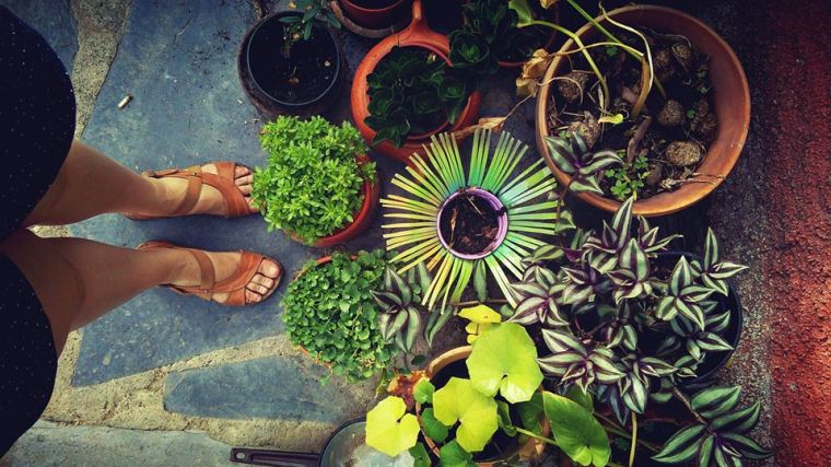 My feet selfie with some succulents