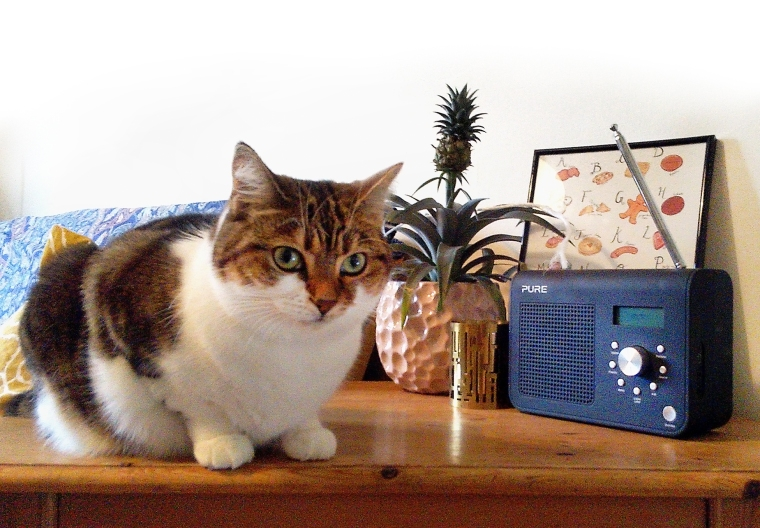 Monti the podcat's favourite podcasts creative industry